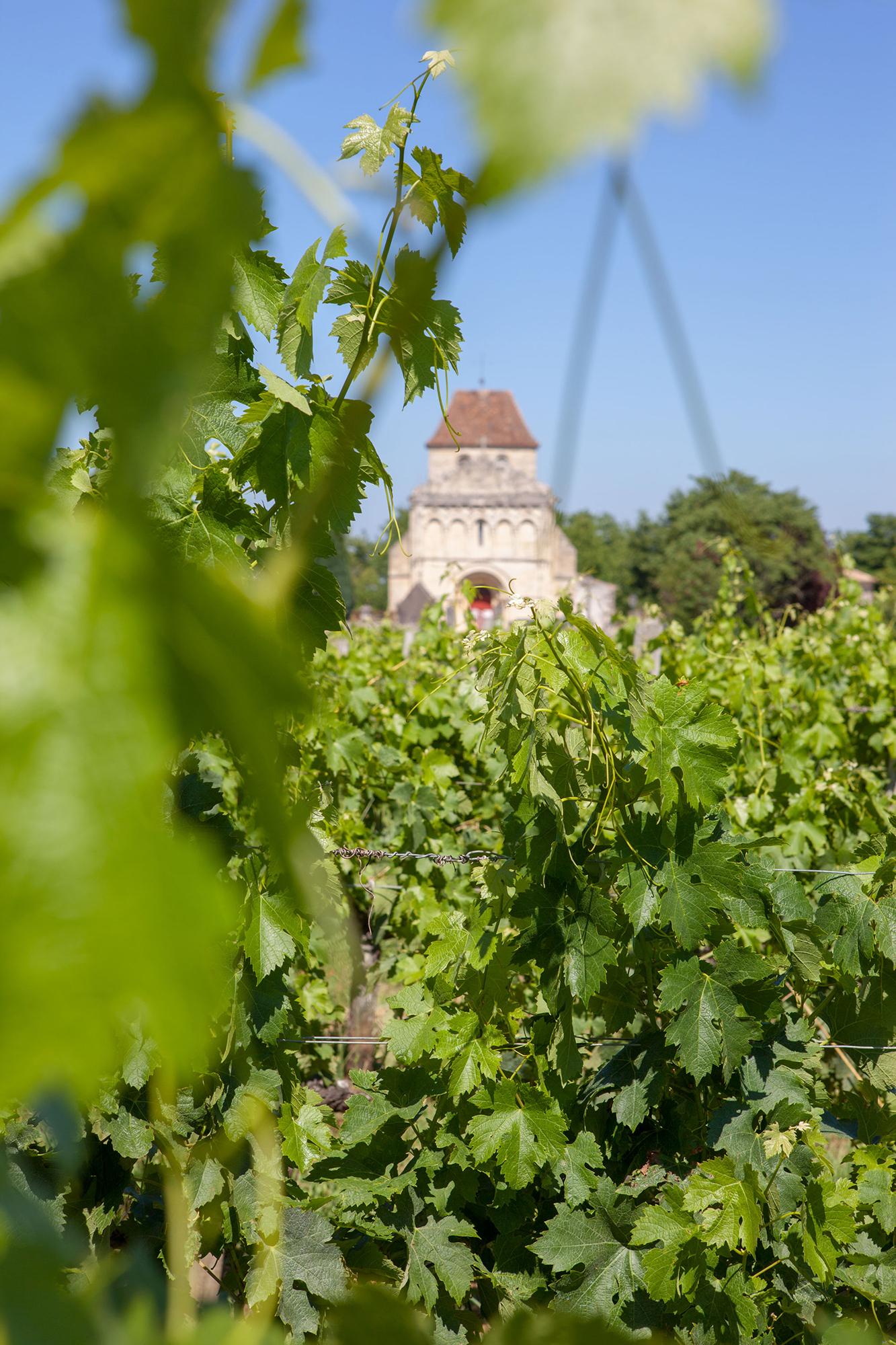 au mileu des vignes été Château Pitray