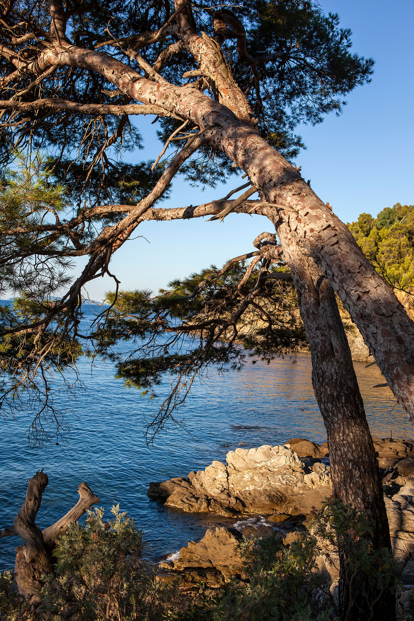 soleil levant sur la crique et les pins