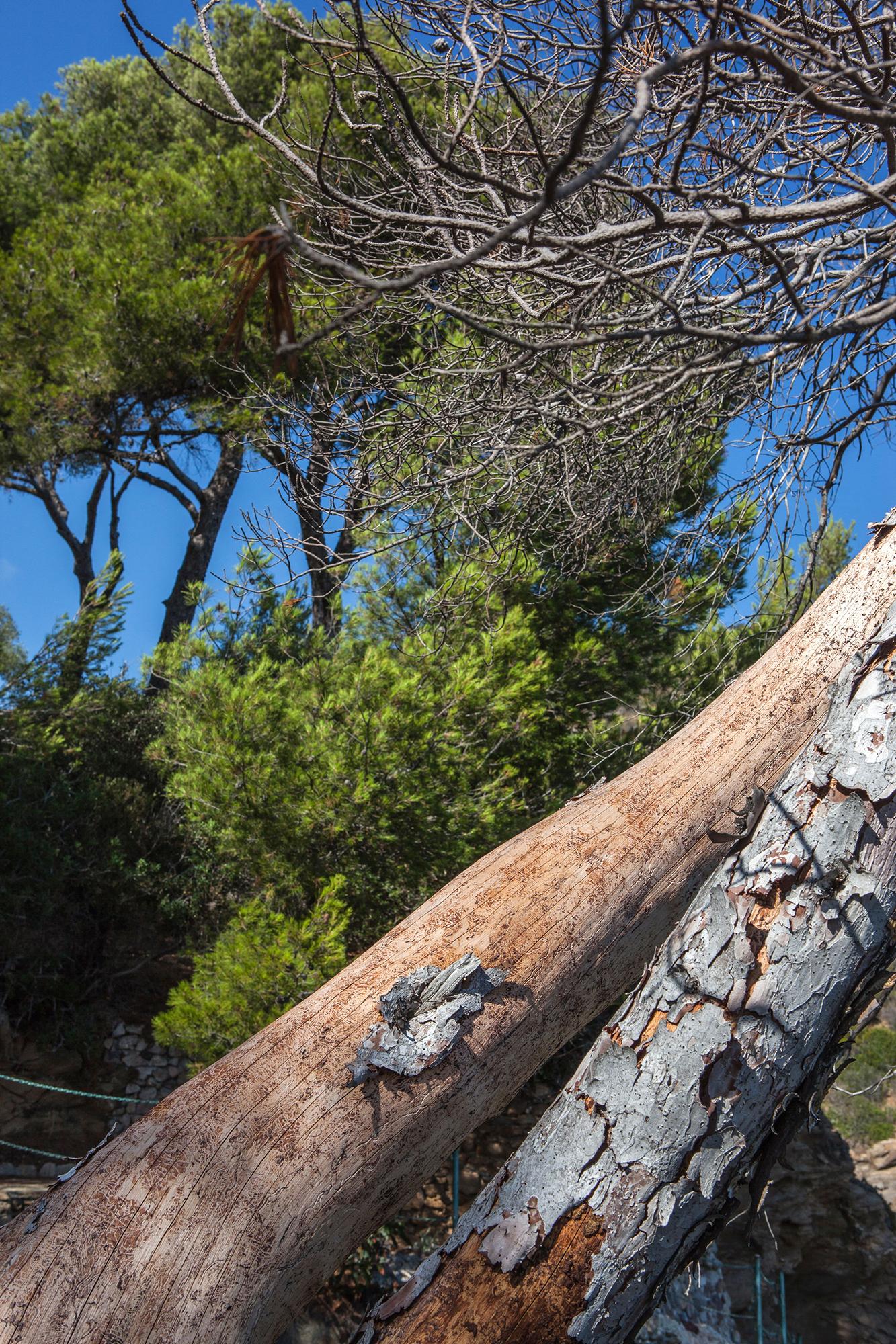 mort et vivant pins contraste