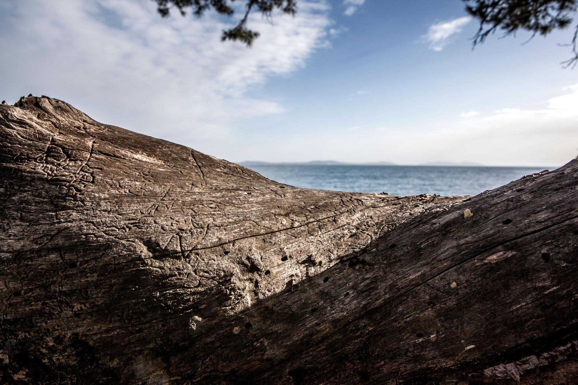arbre mort premier plan vue sur mer