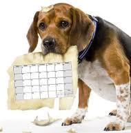 Image result for dog holding a calendar image