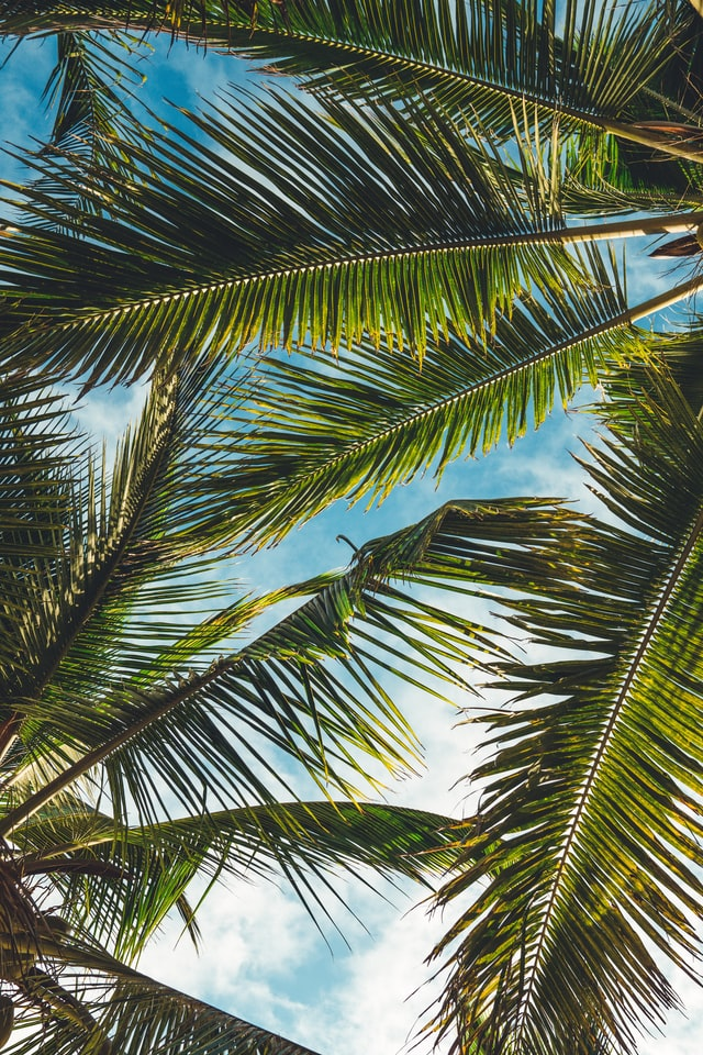 Start above palm trees in Hawaii
