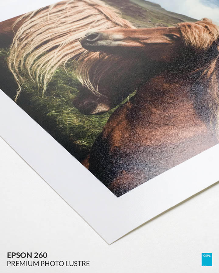 Epson 260 Premium Photo Lustre - Color Services - Santa Barbara
