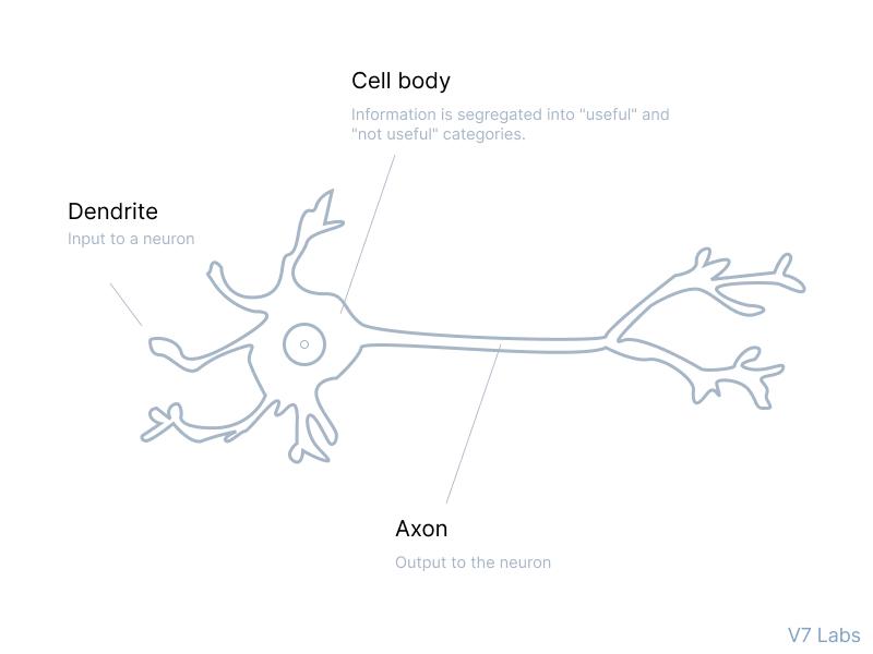 Neuron elements