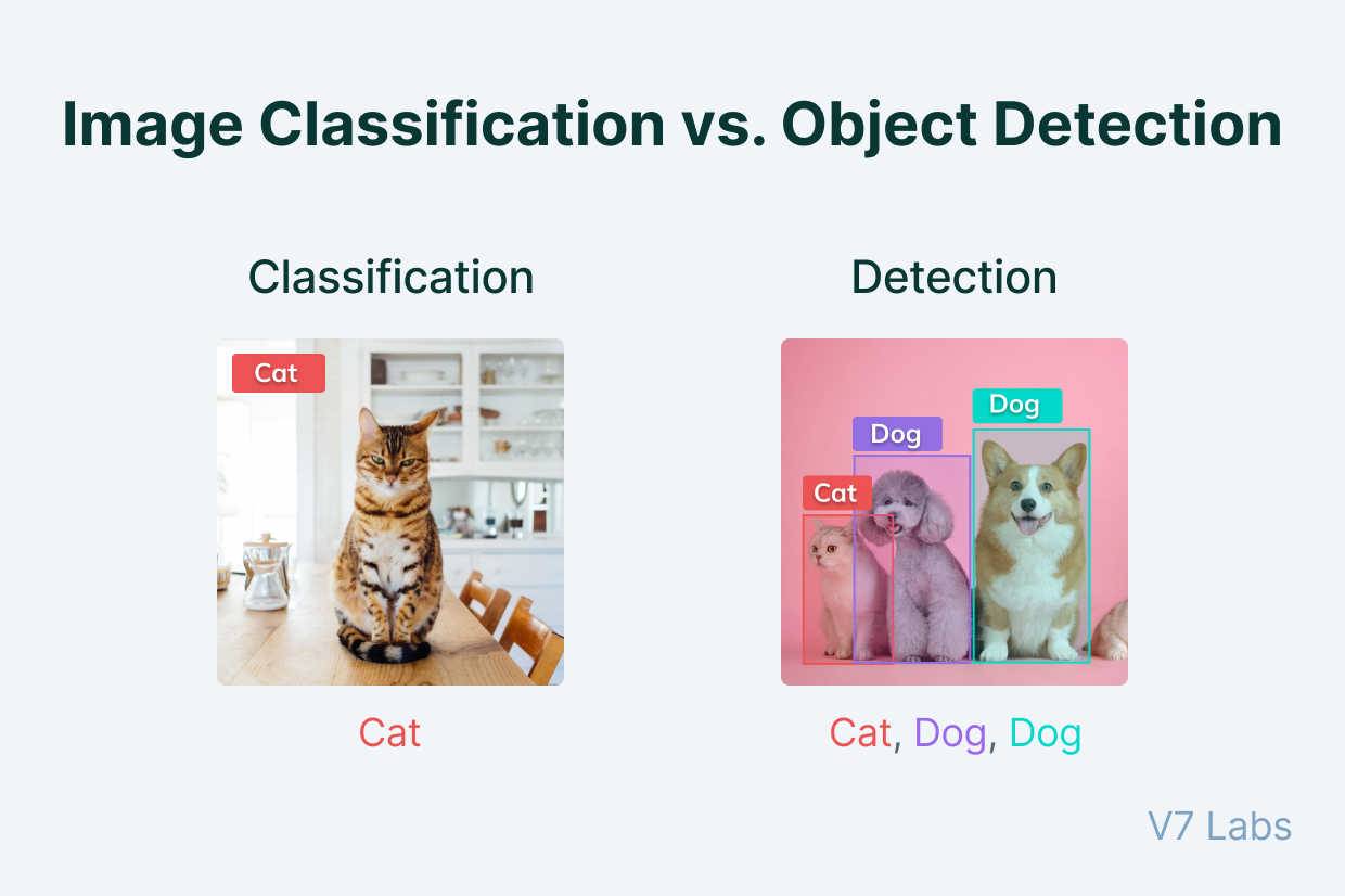Image classification vs Object detection