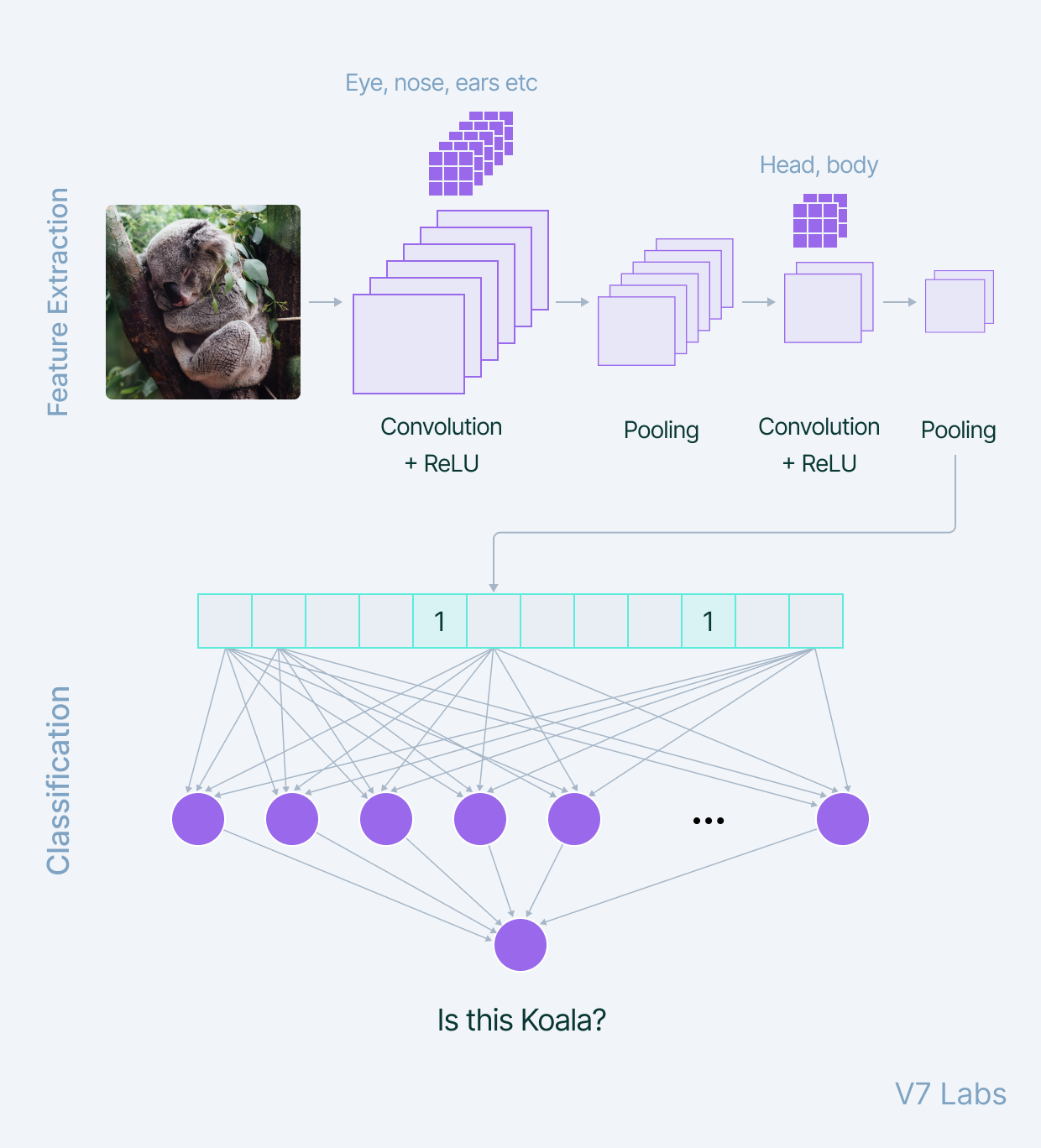 How do Convolutional Neural Networks work?