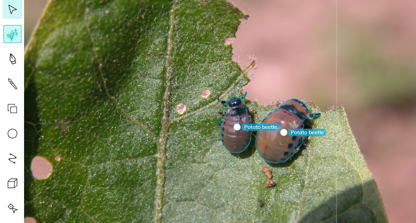 Two ML-assisted annotations of potato beetles for insect detection using computer vision.