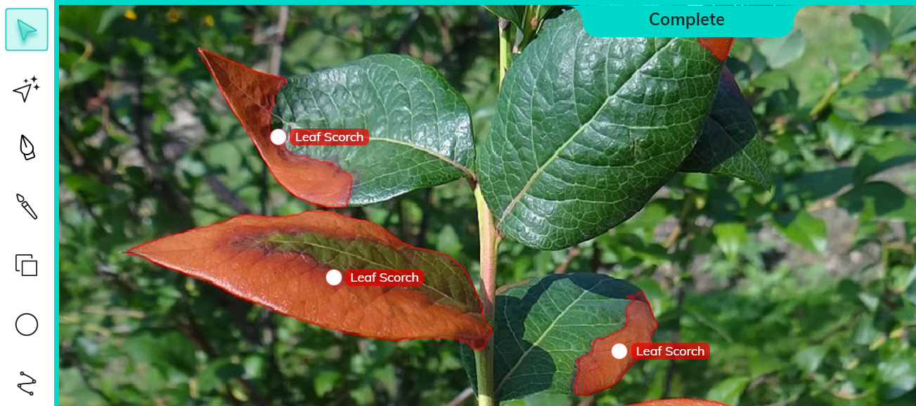 Annotated leaf scorch for plant disease detection