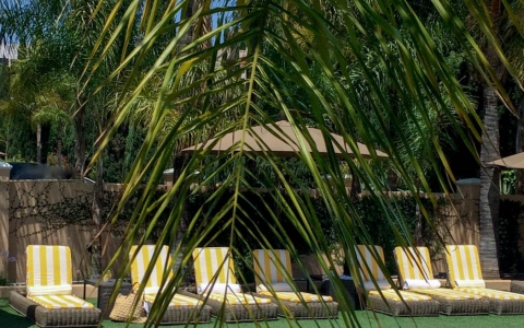 Hollywood Hotel palm tree frond over pool area