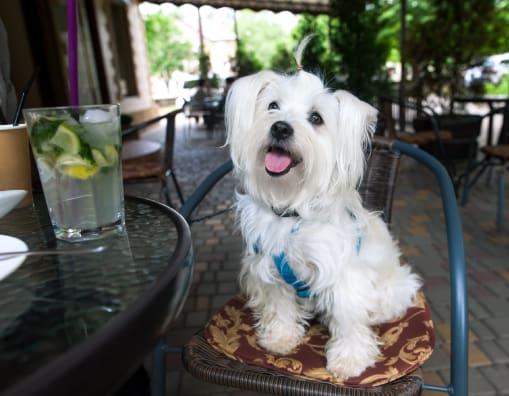Dog sitting on a restaurant chair