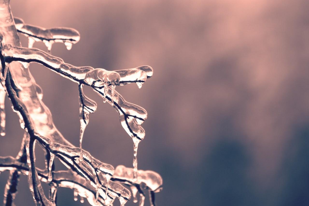 tree branches frozen winter