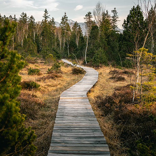 Small wooden path in a forest