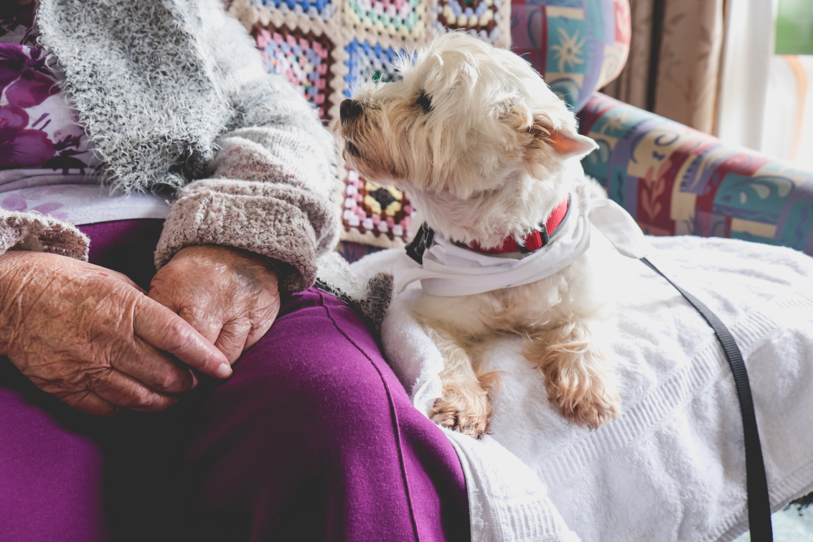 elderly person sitting next to therapy dog