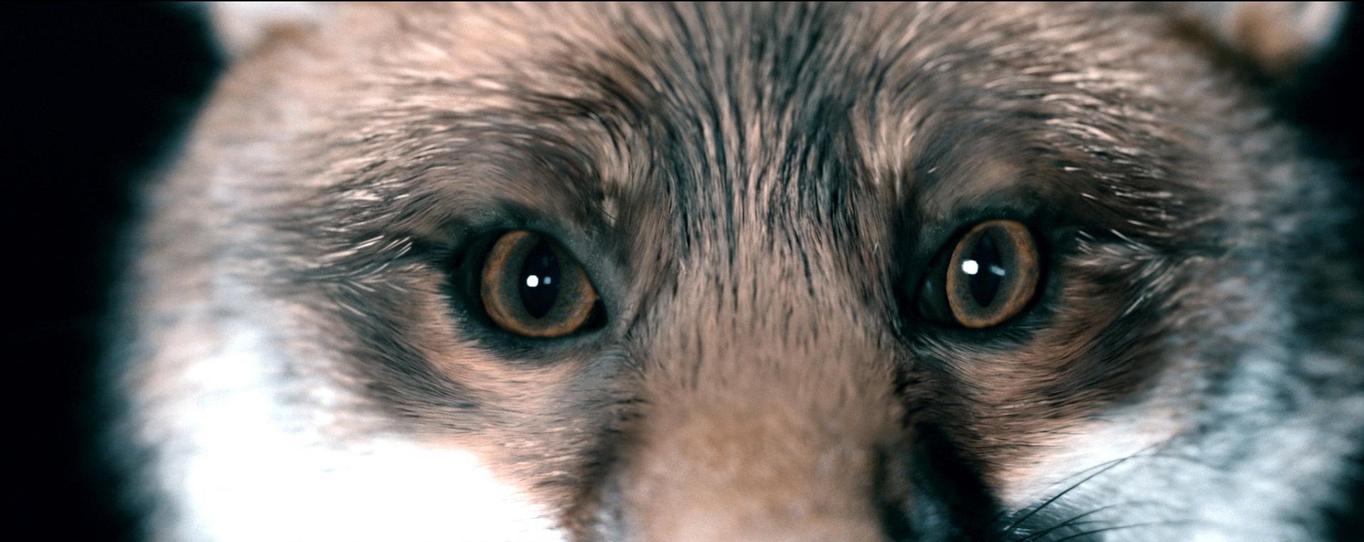 Astra Fox