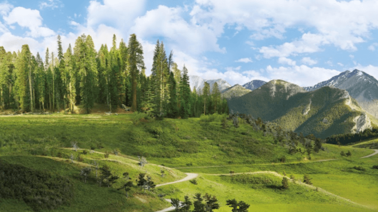50,000 Trees for the 50th Anniversary of Earth Day