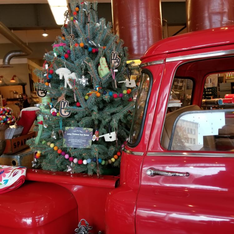 Living Christmas tree rental used for store display at Plenty Mercantile in Oklahoma City in Christmas 2017.