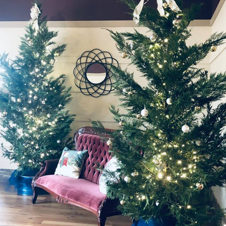 These living Christmas trees were rented to be used in a beautiful December wedding.