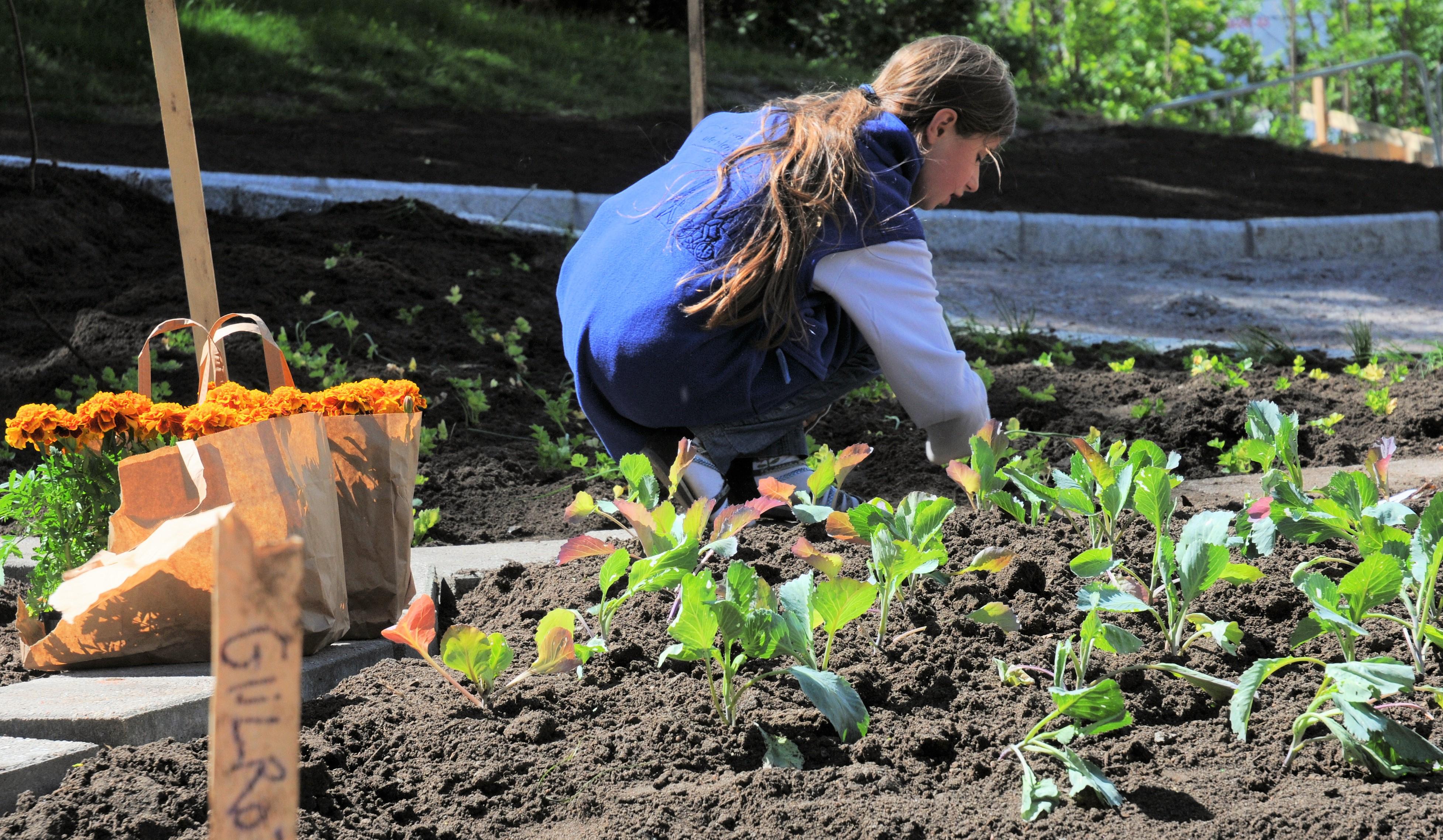 Så- og plantekurs for by-bønder og balkongdyrkere