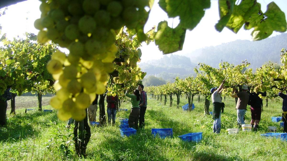 Økologisk og biodynamisk vinsmakekveld
