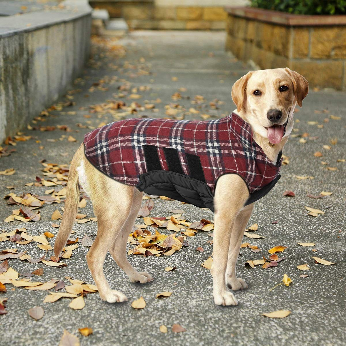 A dog in a plaid coat.