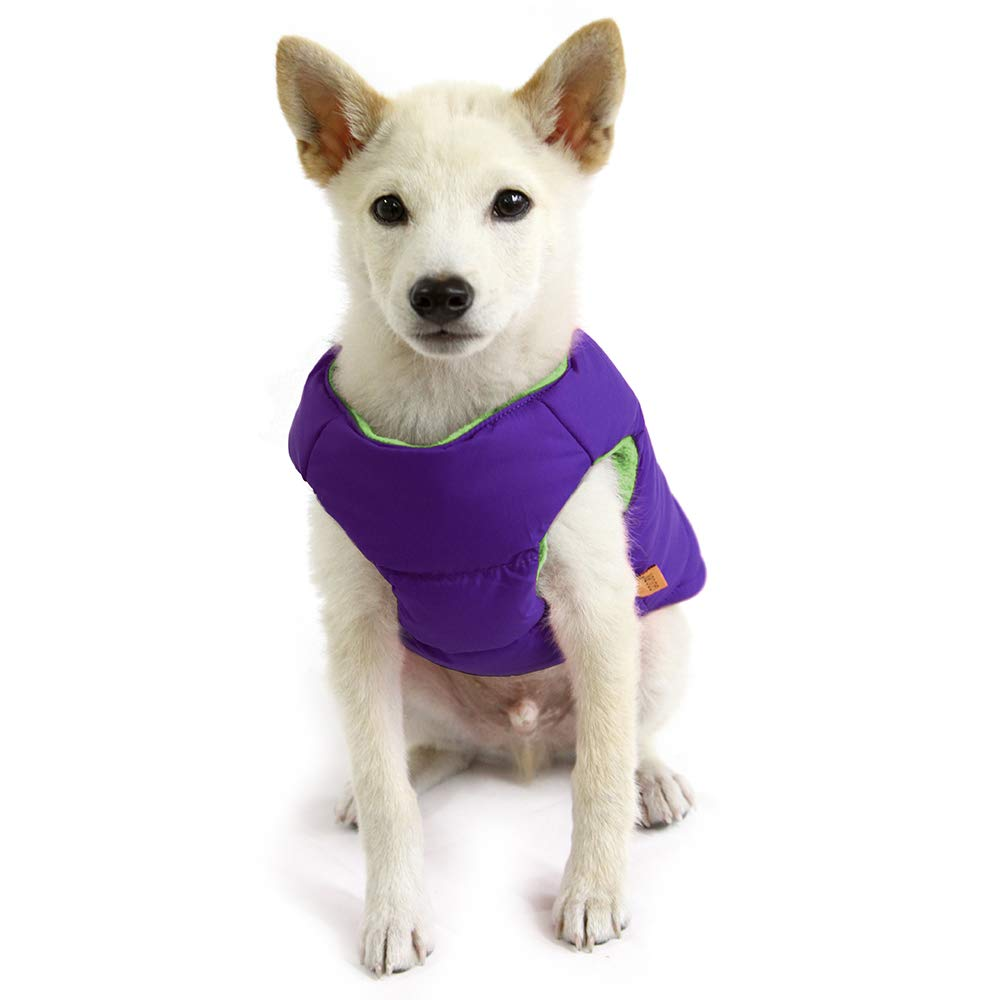 A small white dog in a padded white vest.