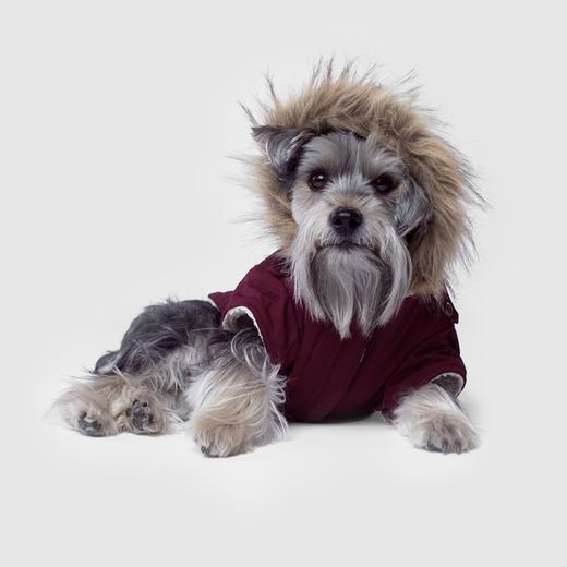 A dog in a fur-lined coat.
