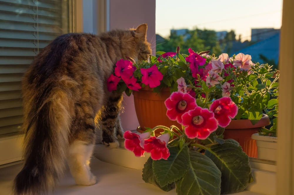 Long hair cat with pink flowering plant