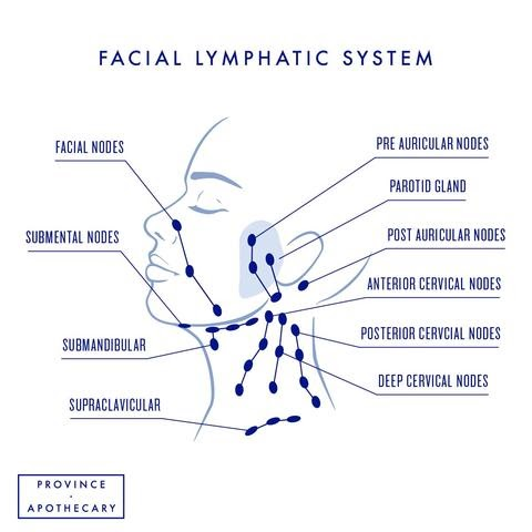 Facial lymphatic system chart