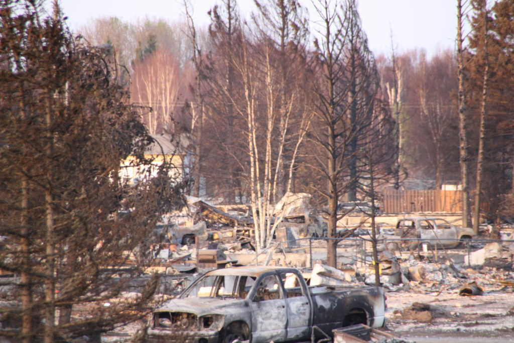 Fire damaged cars and buildings amongst burnt trees.