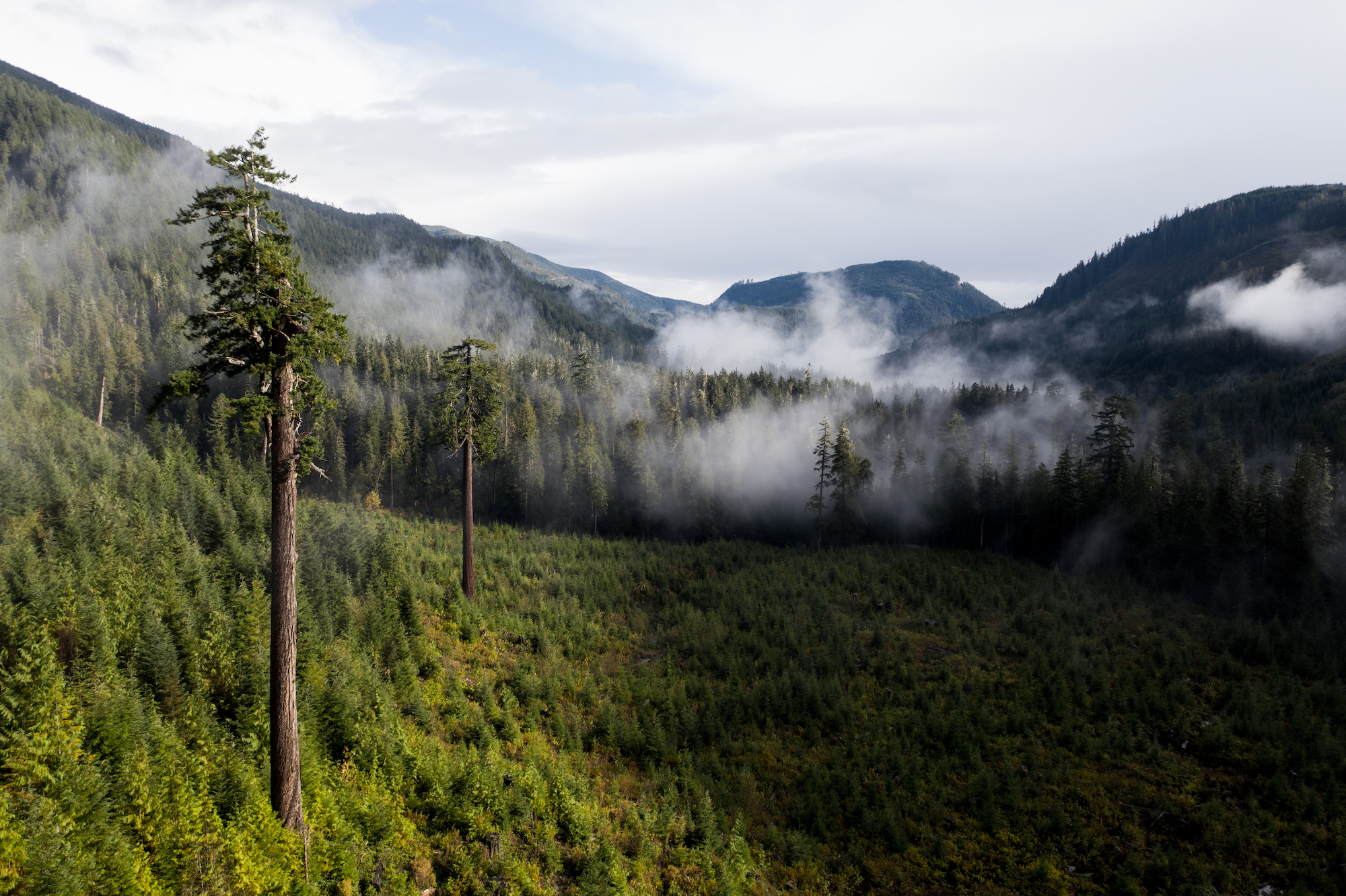 Logging change: old-growth harvesting has deep roots on Vancouver Island, but how long can it last?