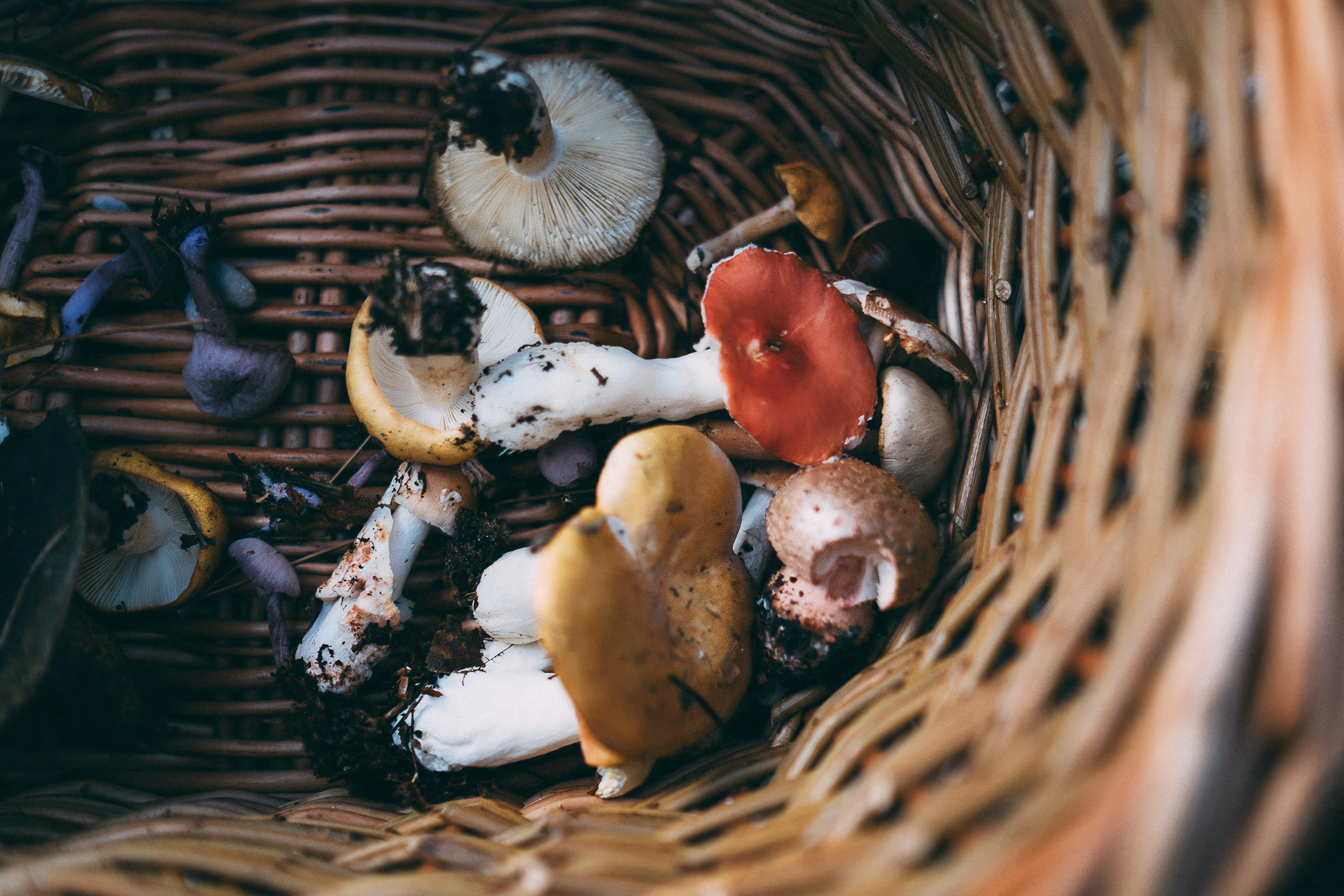 Vancouver Island is a wild food smorgasbord. If you forage, here's how to do so respectfully.