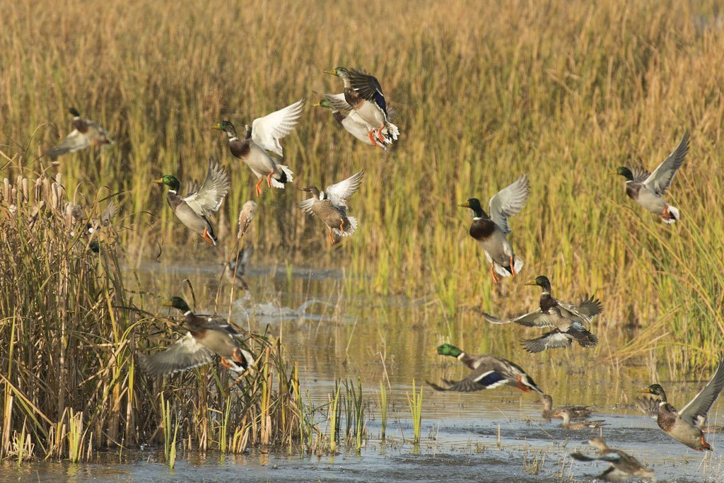 Spring 2020 Waterfowl Habitat Outlook