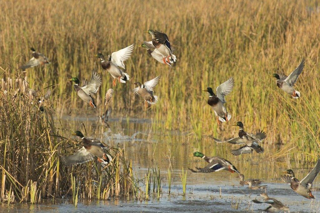 Spring 2020 Waterfowl Habitat Outlook