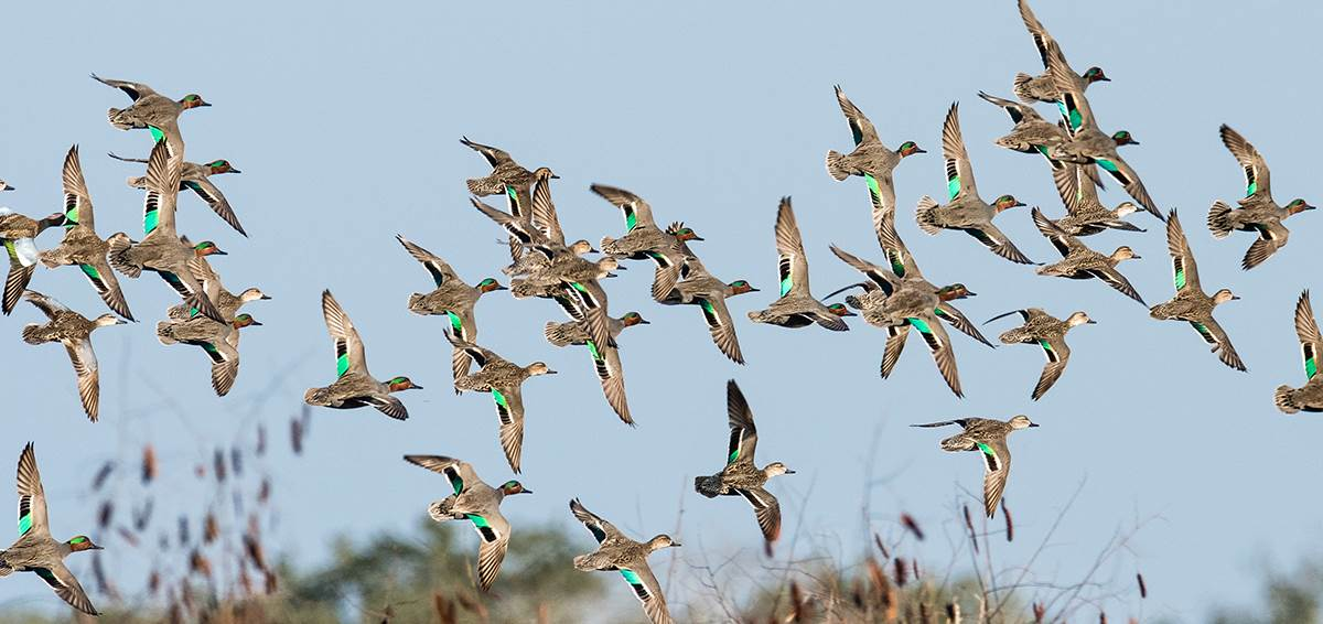 Summer 2020 Waterfowl Production Outlook