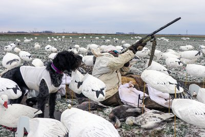 Hunters and their dogs often wear white to add to the spread.