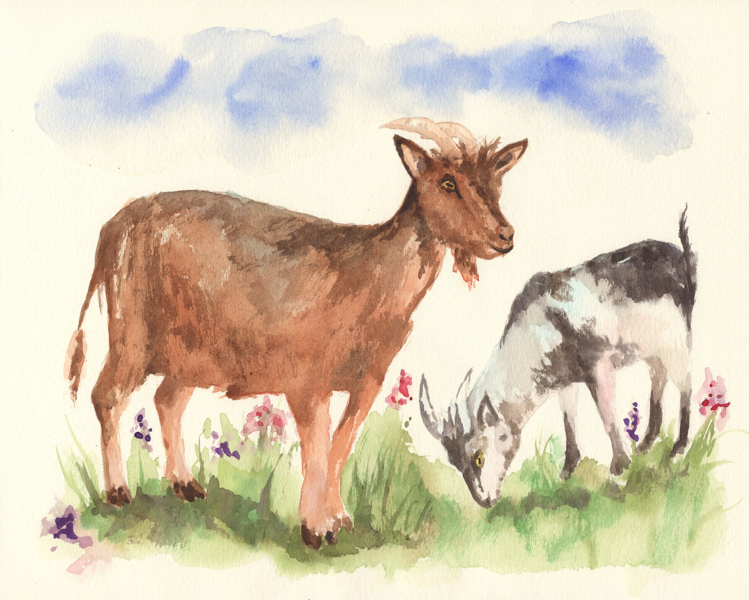 goat 6 goats.jpg