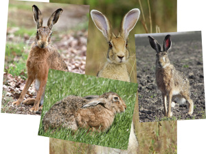These are th eother hare images I bought - so excited to use these in future works...