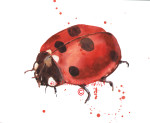 Ladybug April