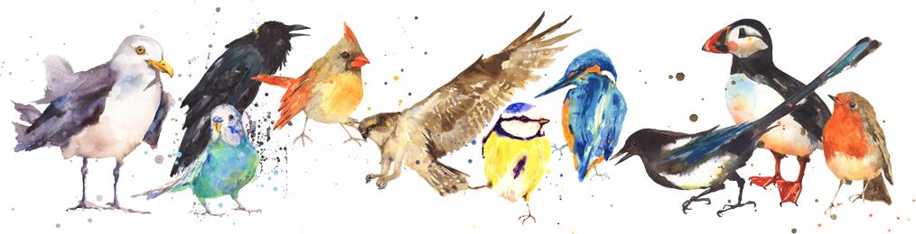 EKM  birds