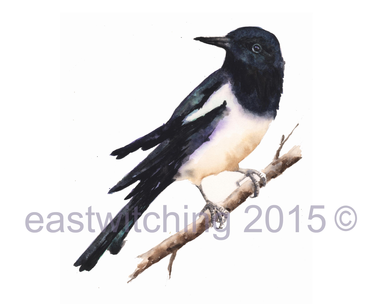 bird magpie twig