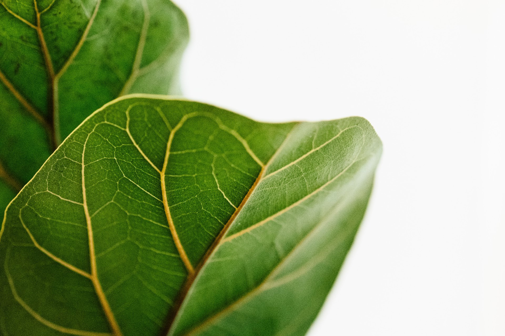plant website background leaf