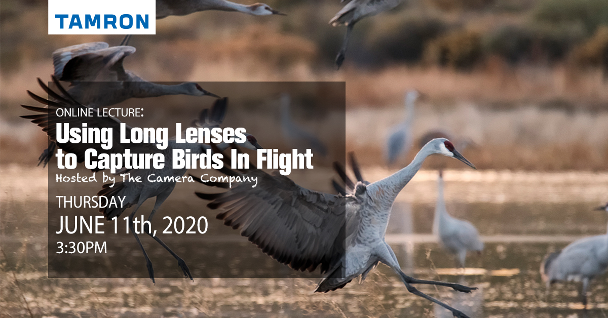 FREE Online Class - Using Long Lenses For Bird Photography