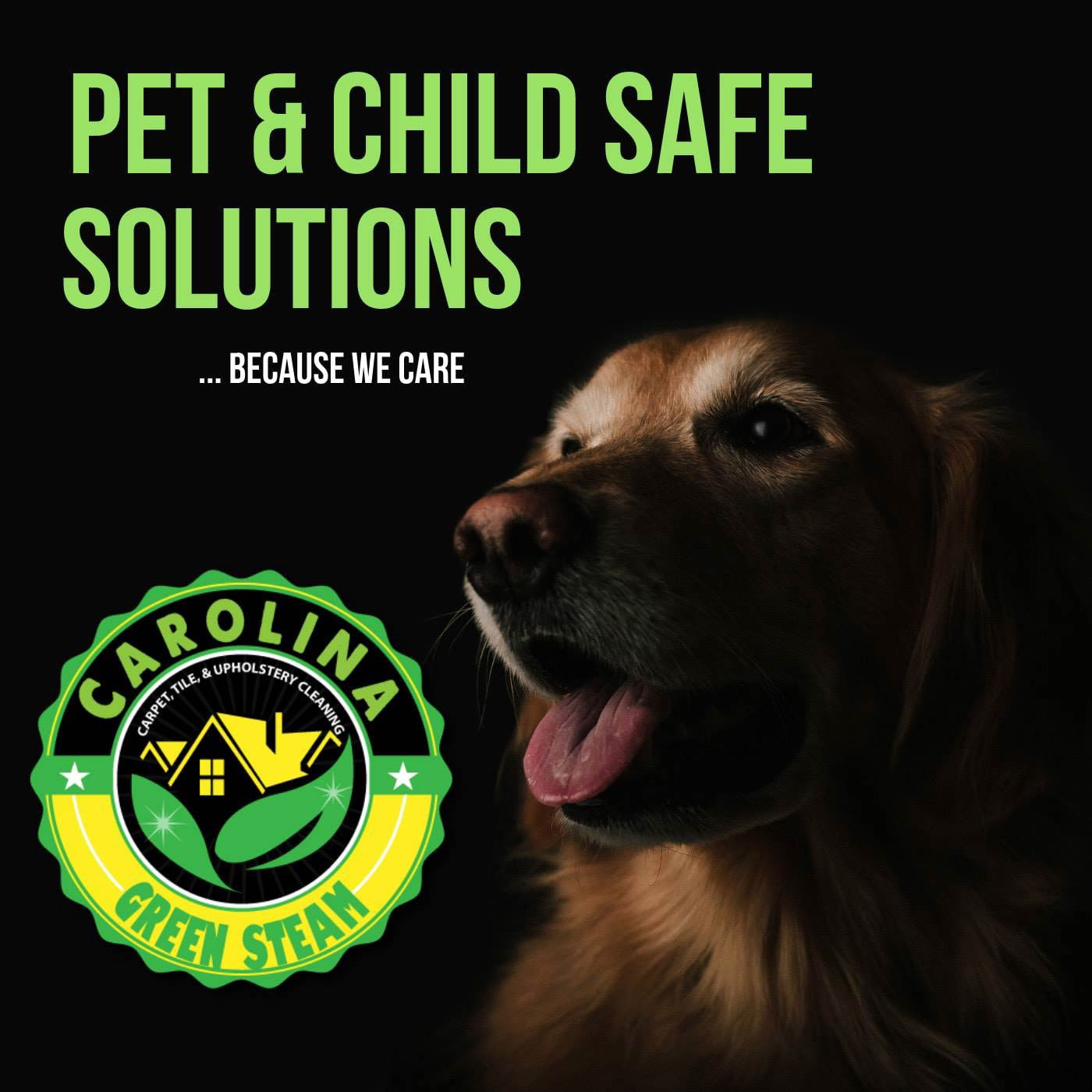 Pet safe cleaning solutions