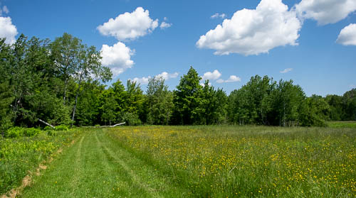 meadow and forest