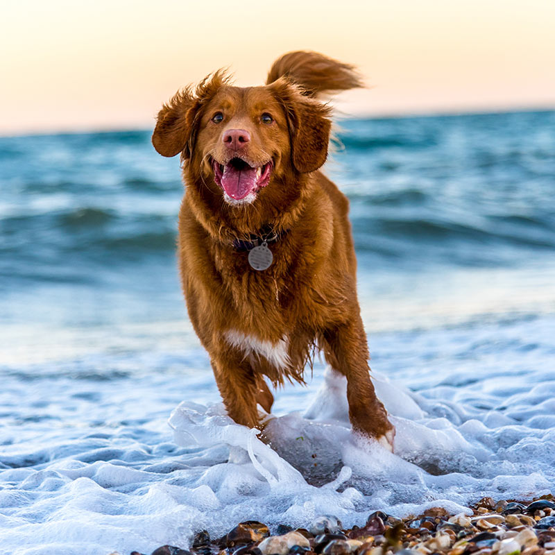 Dog running on beach in sea