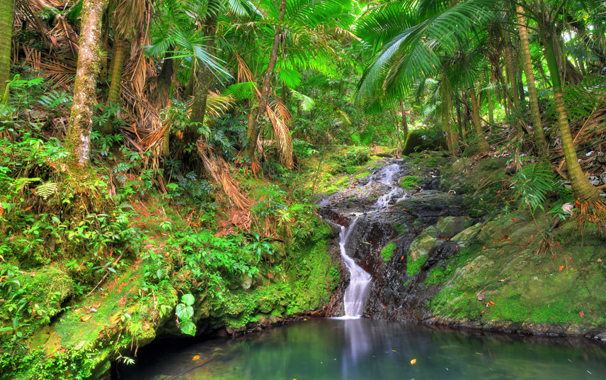 Natural beauty of Puerto Rican rainforests