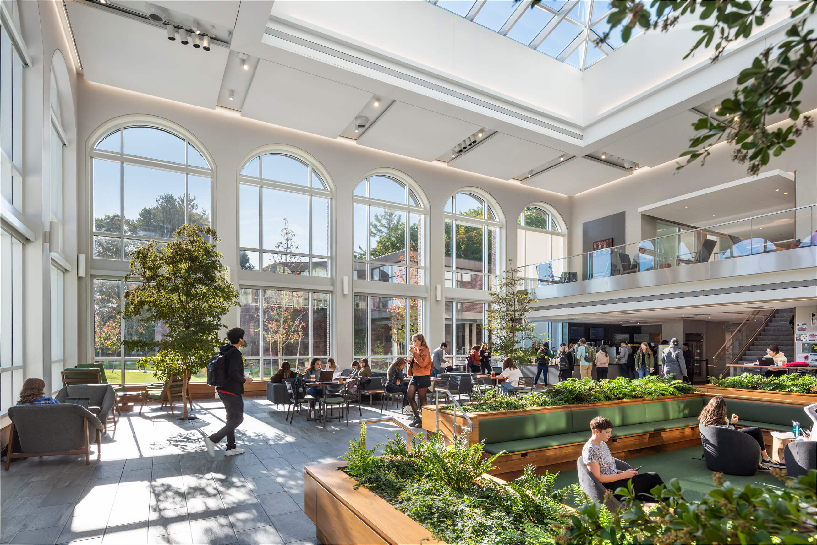 Student studying and socializing in a light-filled space, with indoor trees and plantings defining the space around varied seating areas.