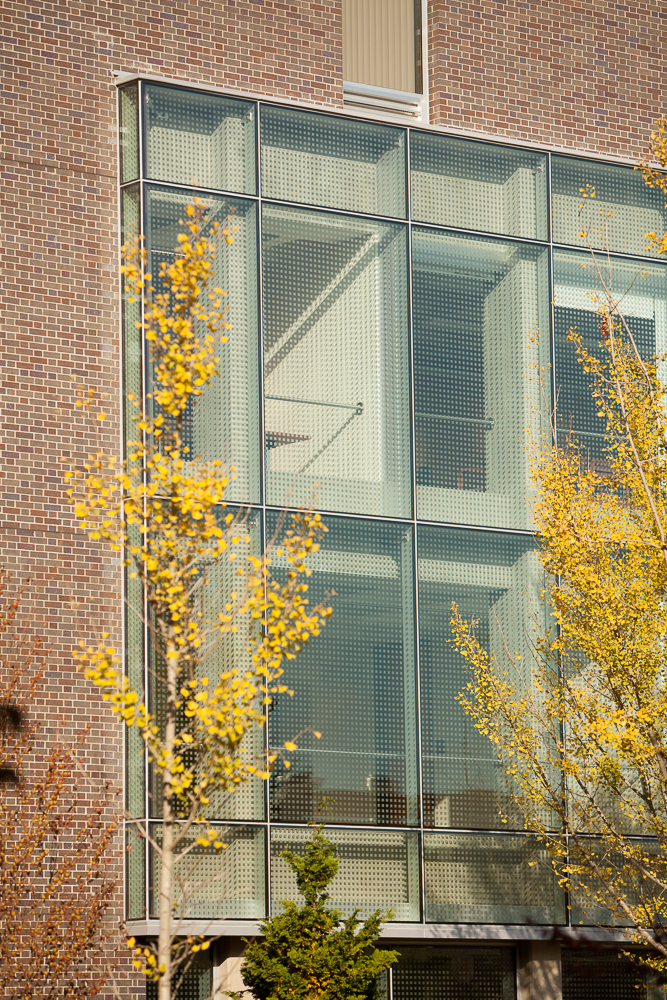 Detail view of Pound Hall's glass curtain wall, with autumn yellow trees in the foreground.