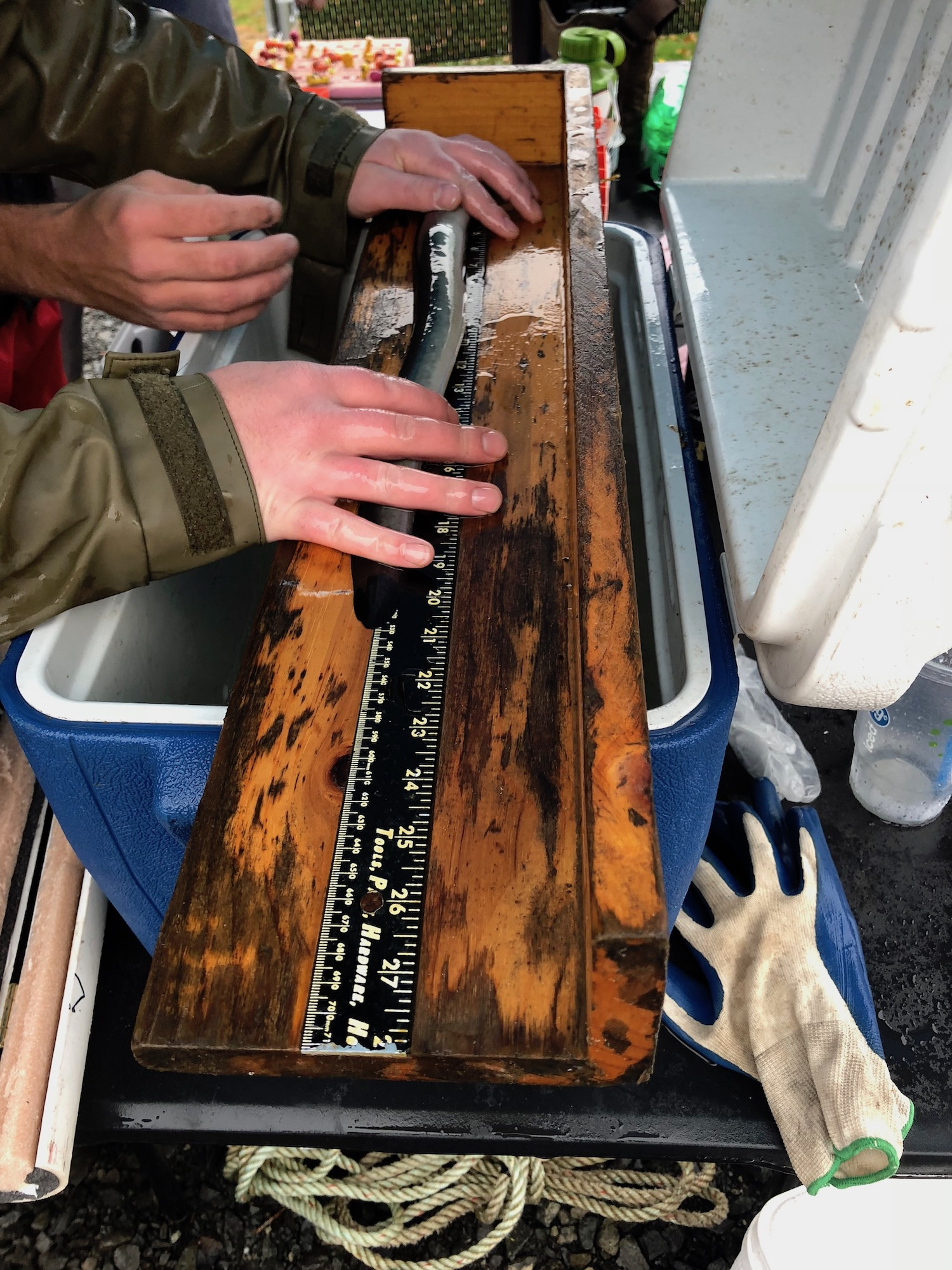 Eel survivability studies, measuring eels