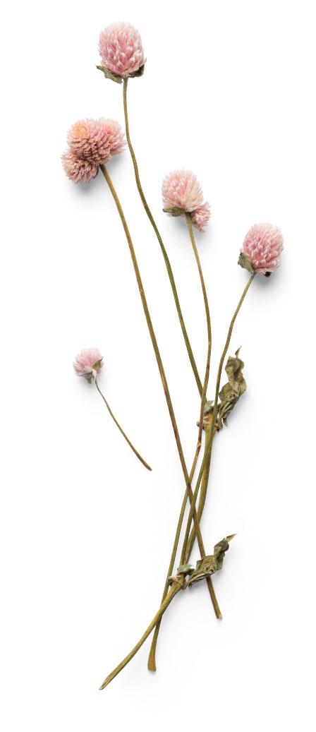 Den lille florist sorgbinderi